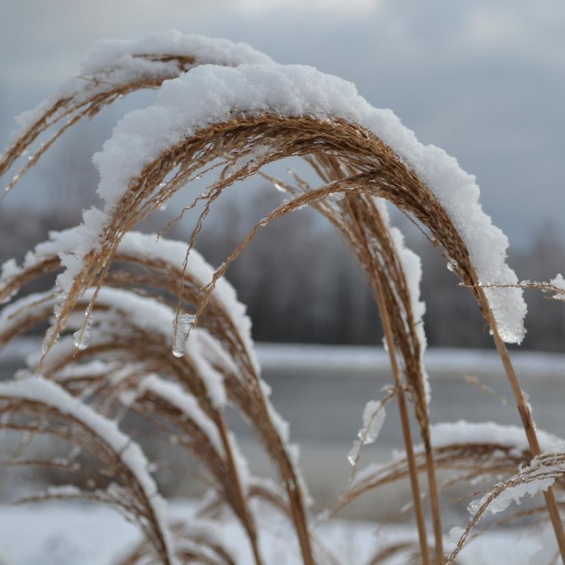 vintergrasvippor_3000