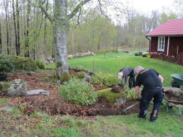 Trädgård 2015 001