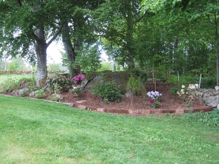 Trädgård 2015 065
