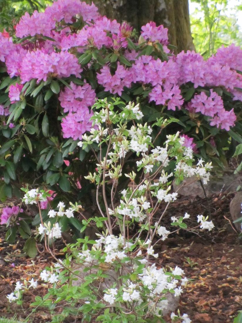 Trädgård 2015 163