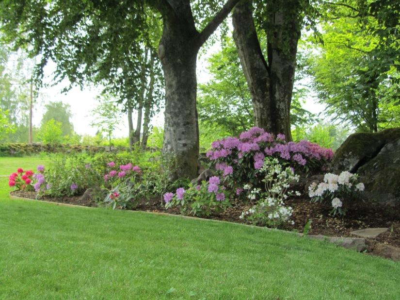Trädgård 2015 164