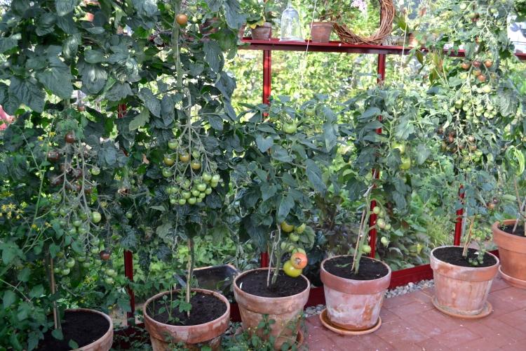 Växthus 3