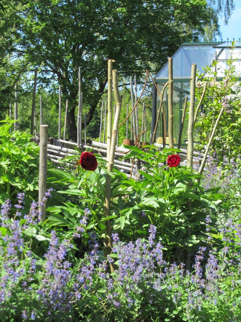 Trädgård 2015 090