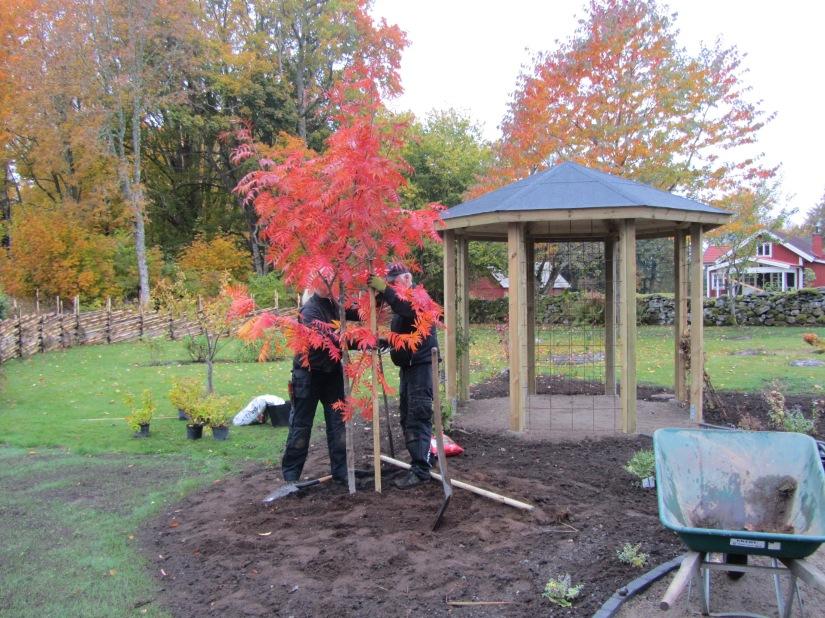 trädgård hösten 2013 159